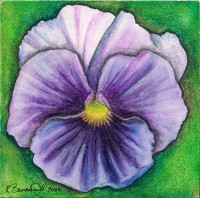 "Pansy II, 2008, Inktense and watercolor on aquaboard, 4""x4"". Copyright Rebe Banasiak, The Brush Hilt and Banasiak Art Gallery."