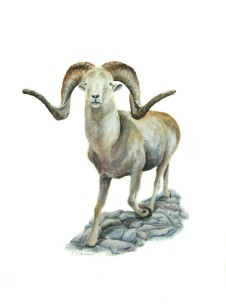 "The Year of the Ram, 2009, Watercolor on paper, 9""x15"". Copyright Rebe Banasiak, The Brush Hilt and Banasiak Art Gallery."