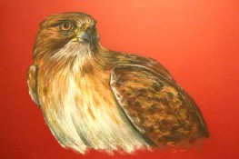 "Red-tailed hawk, 2014, Pastel on matte board, 21""x29.5"". Copyright Rebe Banasiak, The Brush Hilt and Banasiak Art Gallery."