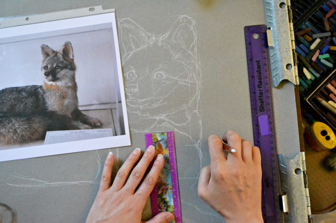 Drawing a grey fox. Photograph by MissLissa Photography.