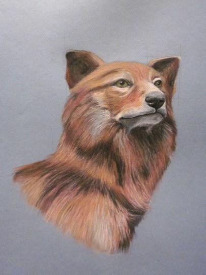 "Mexican grey wolf (portrait I), 2013, Pastel on paper, 19""x25"". Copyright Rebe Banasiak, The Brush Hilt and Banasiak Art Gallery."