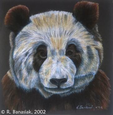 "Su Lin portrait III, 2002, Colored pencil on paper, 12""x12"". Copyright Rebe Banasiak, The Brush Hilt and Banasiak Art Gallery."