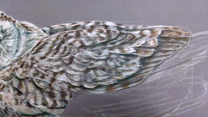 Wing and the feather pattern.
