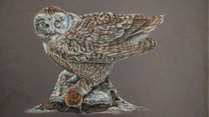 Snowy owl, 2014, Dewent colored drawing pencils on Mi-tients paper, 19x25.  Copyright Banasiak Art Gallery and Rebe Banasiak.