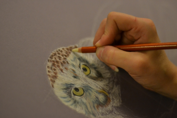 Adding color to the Snowy owl's face creating the texture of the feathers.