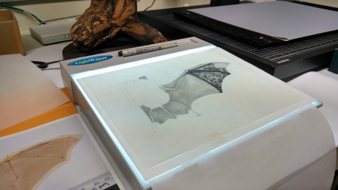 Rhinolophus illustration on a light table.  Stipling on vellum from a graphite drawing.