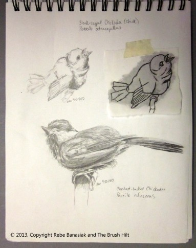 Chickadee sketches, Sketchbook 4 page 20, 2013, graphite.