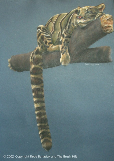 Clouded Leopard, 2002, pastel on paper.