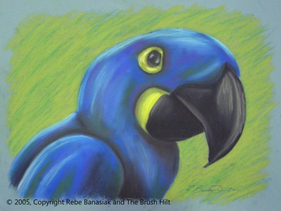 Hyacinth Macaw, 2005, pastel on paper.