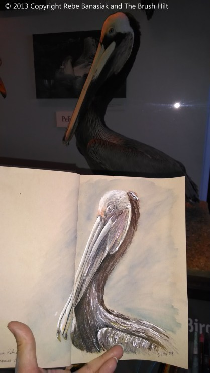 Brown pelican, Sketchbook 5, 2013, colored pencil and ink.