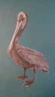 Brown pelican, 2015, Colored pencil on matte board, 18″x24″. Copyright Rebe Banasiak, The Brush Hilt and Banasiak Art Gallery.