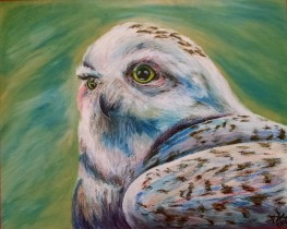 Snowy owl, 2015, Oil pastel on clayboard, 16″x20″. Copyright Rebe Banasiak, The Brush Hilt and Banasiak Art Gallery.