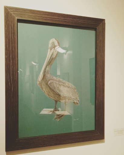 Brown pelican, 18x24, colored pencil on matte board