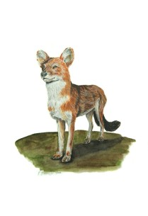 "The Year of the Dog (Dhole), 2008, Watercolor on paper, 9""x15"". Copyright Rebe Banasiak, The Brush Hilt and Banasiak Art Gallery."