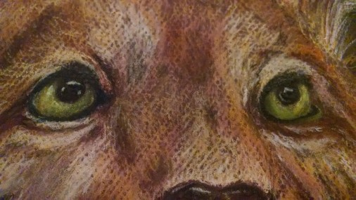 Detail of the eyes.