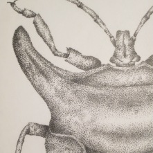 "Closeup: Bug, 2000, Ink on vellum, 11""x17"". Copyright Rebe Banasiak, The Brush Hilt and Banasiak Art Gallery."