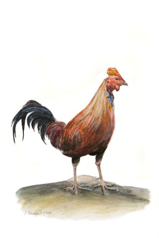 "The Year of the Rooster (Junglefowl), 2008, Watercolor on paper, 9""x15"". Copyright Rebe Banasiak, The Brush Hilt and Banasiak Art Gallery."