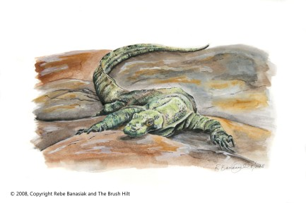"The Year of the Dragon (Kimodo dragon), 2008, Watercolor on paper, 9""x15"". Copyright Rebe Banasiak, The Brush Hilt and Banasiak Art Gallery."