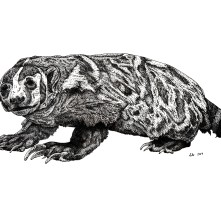 "North American Badger, 2019, Ink on vellum, 11""x17"". Copyright Rebe Banasiak, The Brush Hilt and Banasiak Art Gallery."