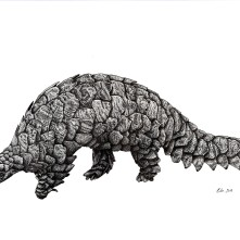"Ground Pangolin, 2019, Ink on vellum, 11""x17"". Copyright Rebe Banasiak, The Brush Hilt and Banasiak Art Gallery."
